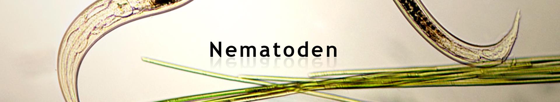 Kategoribillede_Nematoder_DE